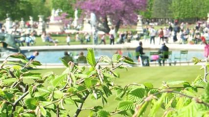 Tuileries Garden Park in Paris with Fountain