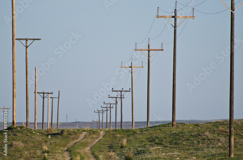 Utility Poles Standing in the Desert