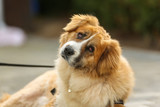 Mixed-bred dog poster