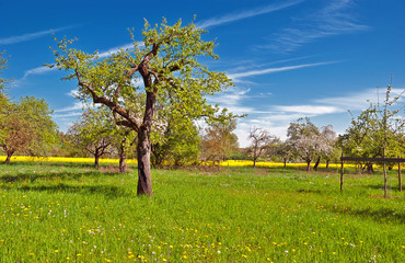 Erholung in schattigen Plätzchen unter alten Obstbäumen