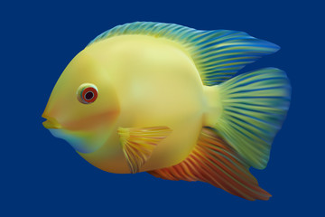 Golden tropical fish. Vector illustration