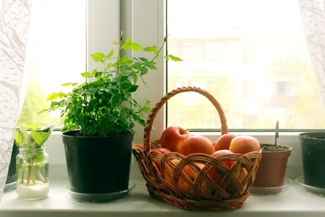 Still life at the windowsill