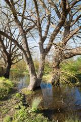 Mangrove in Salburua park, Vitoria (Spain)