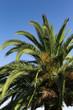 Palmtree - 01