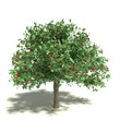 3d illustration of an apple tree