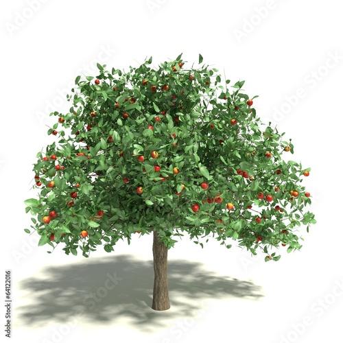 Papiers peints Arbre 3d illustration of an apple tree