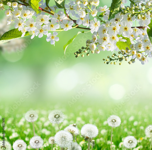 Wall mural spring background