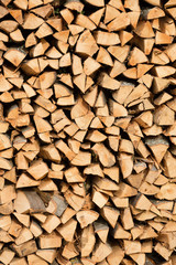 Large beech wood pile