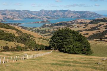grassy slopes above Banks Peninsula
