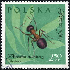 stamp printed in Poland, shows Formica rufa ant