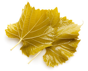 Marinated grape leaves for dolma on white background