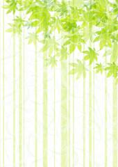新緑 和紙風 もみじ