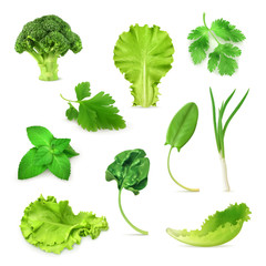 Green vegetables and herbs set