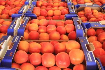 mele del trentino frutta doc