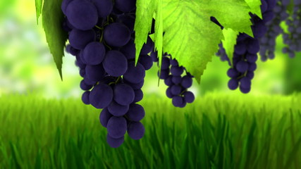 Animation 3d of wine grapes.