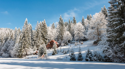 Украина,зимний лес в Карпатах