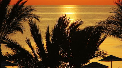 beautiful landscape with palms and sunrise over sea
