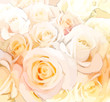 Floral background with stylized roses in pastel colors