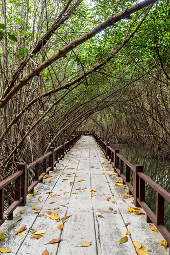 Travel mangrove forest on summer