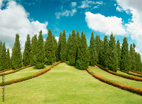 cypress trees on top of  hill