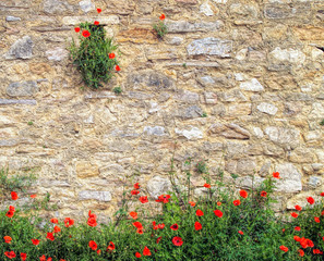 Red poppies on brick background