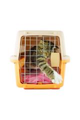 cat inside a cat carrier box