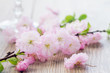 twig of pink cherry flowers