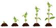 Постер, плакат: Plant Sequence