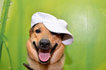 Dog in a baseball cap