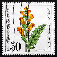 Postage stamp Germany 1981 Moor-king Lousewort, Plant