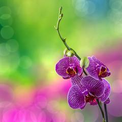 purple orchid flower on blur background