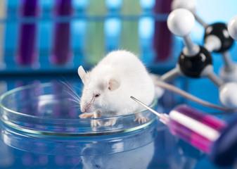 Workplace modern laboratory for molecular biology test