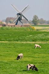Mooie Hollandse landschap met lammetjes