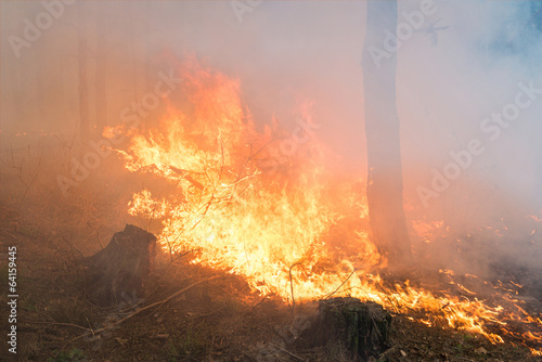 Forest fire. Big flame - 64159445