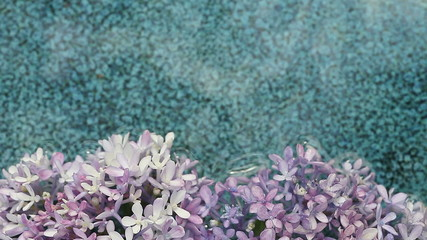 fresh hydrangeas in water with ceramic backgrou