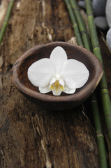 White orchid in bowl and bamboo grove on Driftwood