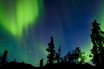 Northern Lights Aurora borealis swirls Yukon taiga