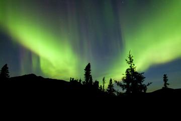 Northern Lights Aurora borealis Yukon spruce taiga