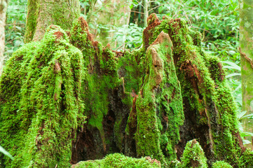 Moss was born naturally on stumps