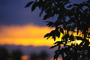 Tree silhouette over sunset