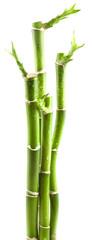 tiges de bambou bonheur