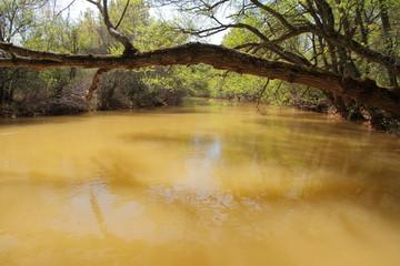 Río Eria y tronco de aliso. San Esteban de Nogales, León.