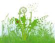 Gräser und Wiese
