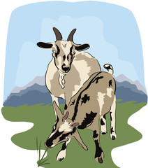 Goats at meadow - realistic illustration