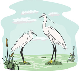 Two herons in the marsh - realistic illustration