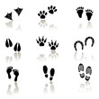 Collection of animal and human foot print. VECTOR icons.