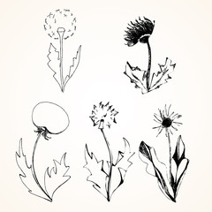 Set of stylized flowers dandelions