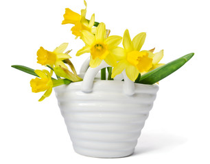 Daffodils in the basket