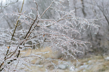 Ice storm on branches