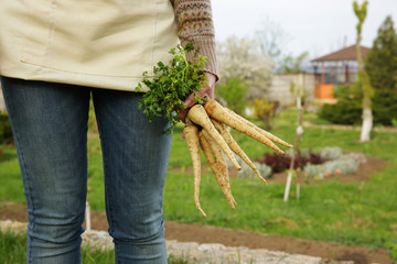 Midsection of woman holding bunch of freshly harvested